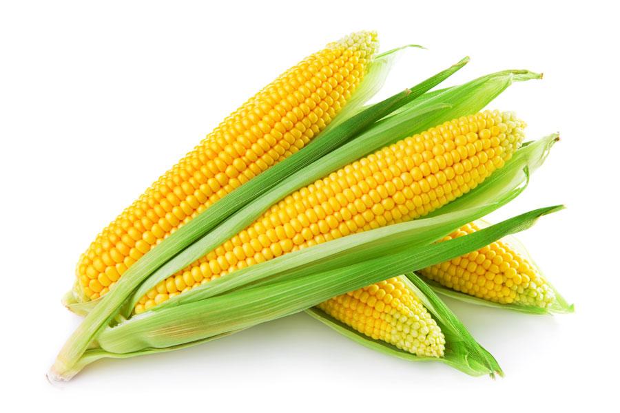 Mejoran perspectivas de producción de cereales para 2016: FAO
