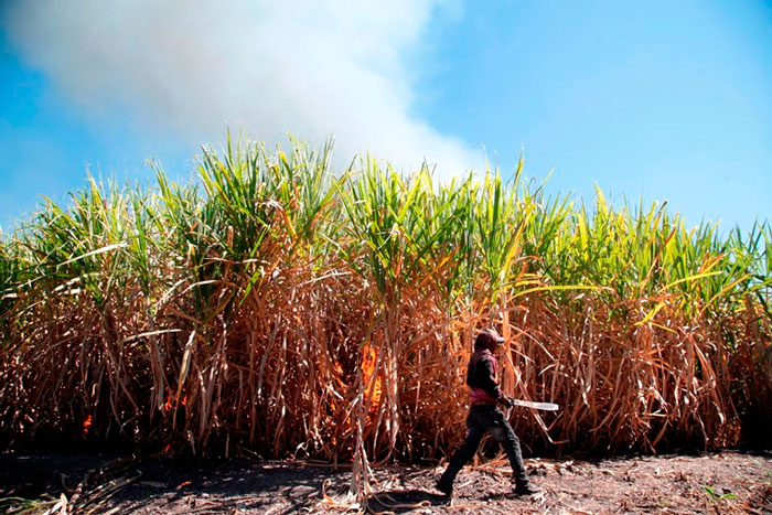 Buscan proteger azúcar mexicana de política restrictiva de EU