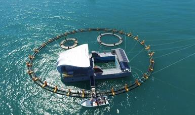 Refuerzan rescate de vaquita marina con 87 detectores acústicos