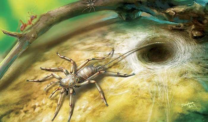 Hallan fósil de araña con cola de hace 100 millones de años