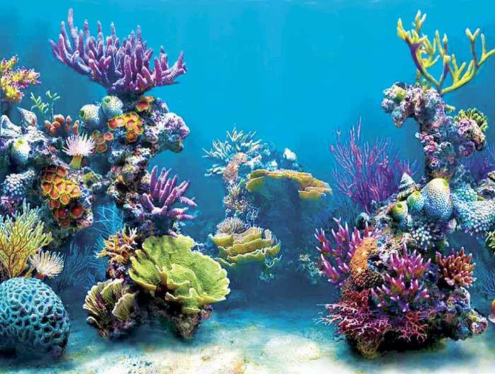 Acidificación del Atlántico amenaza a los arrecifes de coral profundos