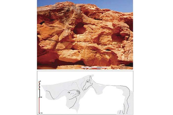 Descubren grabados monumentales y misteriosos de camellos en Arabia Saudí