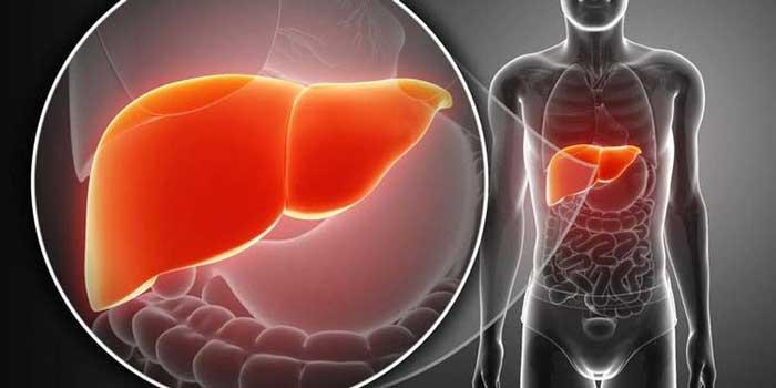 Identifican el mecanismo de cómo se regeneran tejidos del hígado