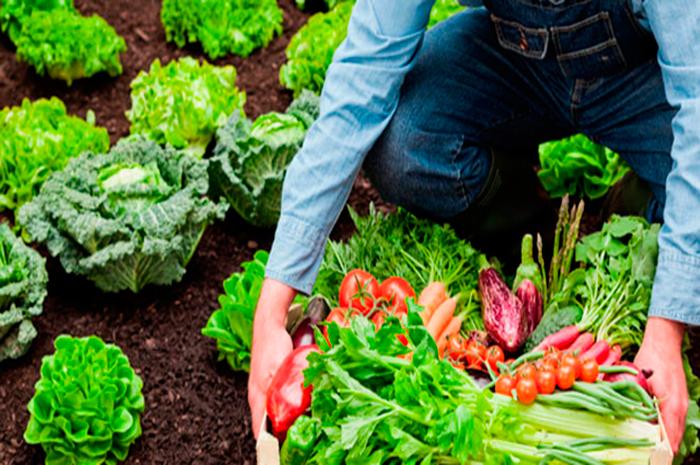 ¿Hay diferencia entre orgánico y natural?