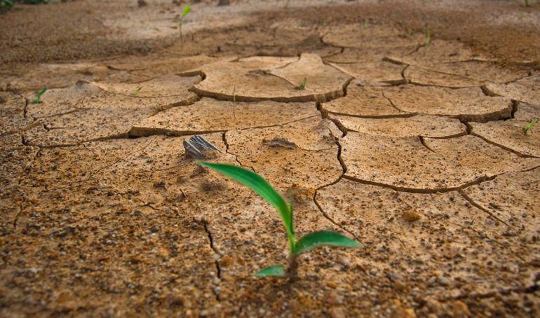 FAO advierte que 33 por ciento de los suelos del planeta están degradados